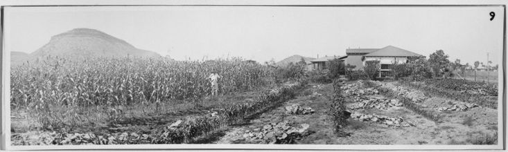 061559PD: Vegetable garden at residence, Manager Meatworks, ca. 1930.  http://encore.slwa.wa.gov.au/iii/encore/record/C__Rb2442197__S061559PD__Orightresult__U__X3?lang=eng&suite=def