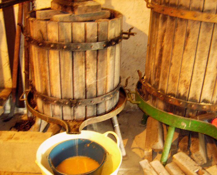Prensando el vino blanco Albariño