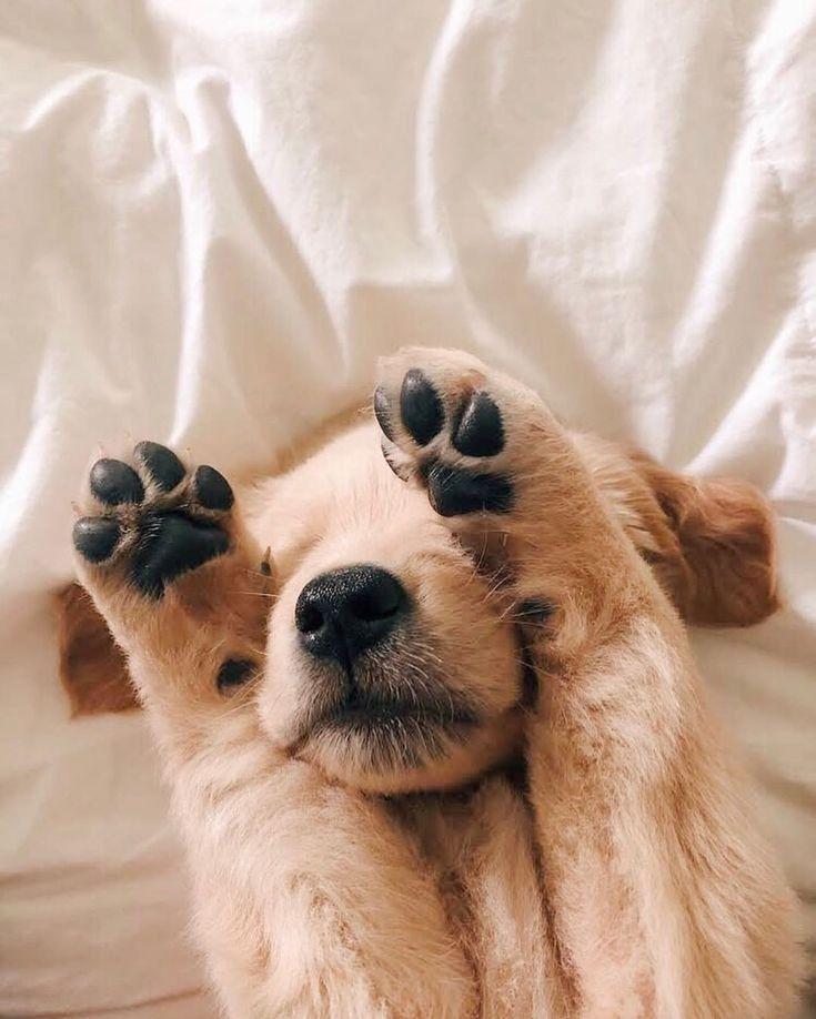 Tiere Wallpaper Tiere Animals In 2020 Babyhunde Susse Tiere