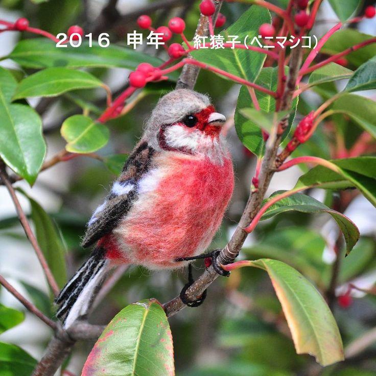 "477 To se mi líbí, 102 komentářů – hiro (@mukutokana.hiro2) na Instagramu: ""羊毛フェルト★ベニマシコ♂  Needle felted/Long―tailed Rosefinch * 今年最初の作品は、さる年ということで紅猿子(ベニマシコ)♪…"""