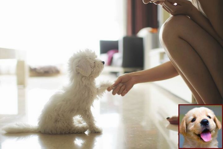 Dog With Behavior Problems And What Is Playful Dog Behavior Dog