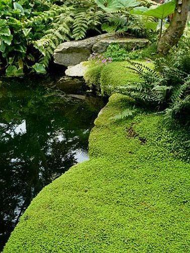 Les 526 meilleures images du tableau bassin de jardin sur - Couvre sol jardin japonais ...