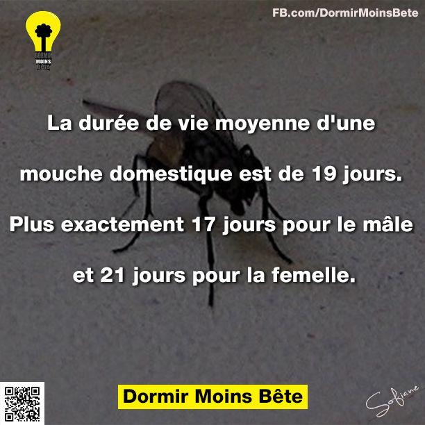 La durée de vie moyenne d'une mouche domestique est de 19 jours. Plus exactement 17 jours pour le mâle et 21 jours pour la femelle.
