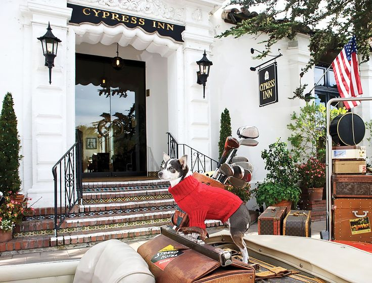 The World S Best Dog Friendly Hotels