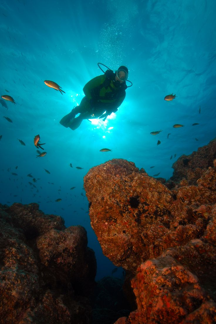 O que escondem os mares da Madeira   The hidden world under Madeira's sea