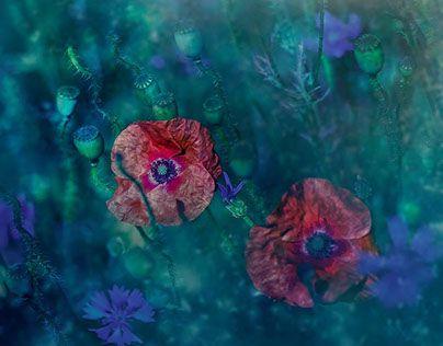 "Check out new work on my @Behance portfolio: ""Creativity Era MODERATION © Aga Mlicka 2015"" http://be.net/gallery/32955011/Creativity-Era-MODERATION-Aga-Mlicka-2015"