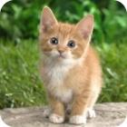 ΔΕΙΤΕ: Χαριτωμένα γατάκια