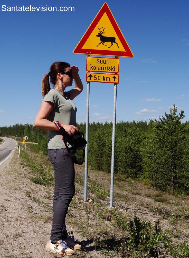 """Straßenschild """"Vorsicht Rentiere"""" in Rovaniemi in Lappland, Finnland"""