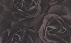 Tapet hartie mov trandafir 525618 Rasch