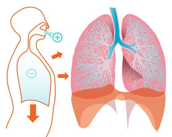 The Best 5 Herbs and Foods for Healthy Lungs - Healthy Life & Food