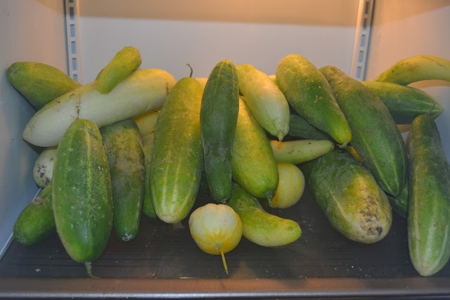 Holy cucumbers! Cucumbers are taking over the garden! Yum--but yikes! Here are a couple recipes to help with cucumber consumption...: Couple Recipes, Gardens Yield, Veggie Gardens, Edible Garden, Cucumber Recipes, Garden Backyard, Holy Cucumbers, Cucumber Consumption