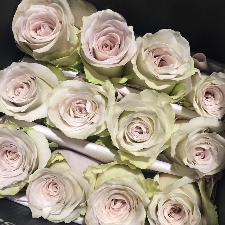 Rose d Equateur early grey #rosesequateur #rungis #fournisseurrungis #grossistefleurs #penja #fleuriste #fleurs #marchederungis #earlygrey #journeedelafemme #nofilter (à Marche Fleurs De Rungis)