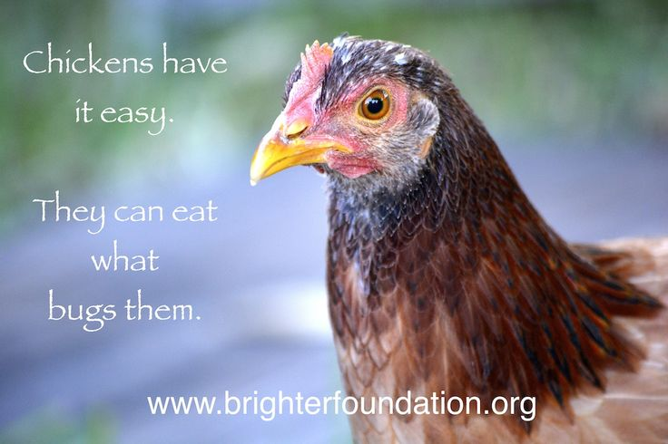 Make your day brighter by #eatingwhatbugsyou. Have a beautiful day! www.brighterfoundation.org