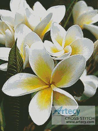 Artecy Cross Stitch. Frangipani 1 Cross Stitch Pattern to print online.