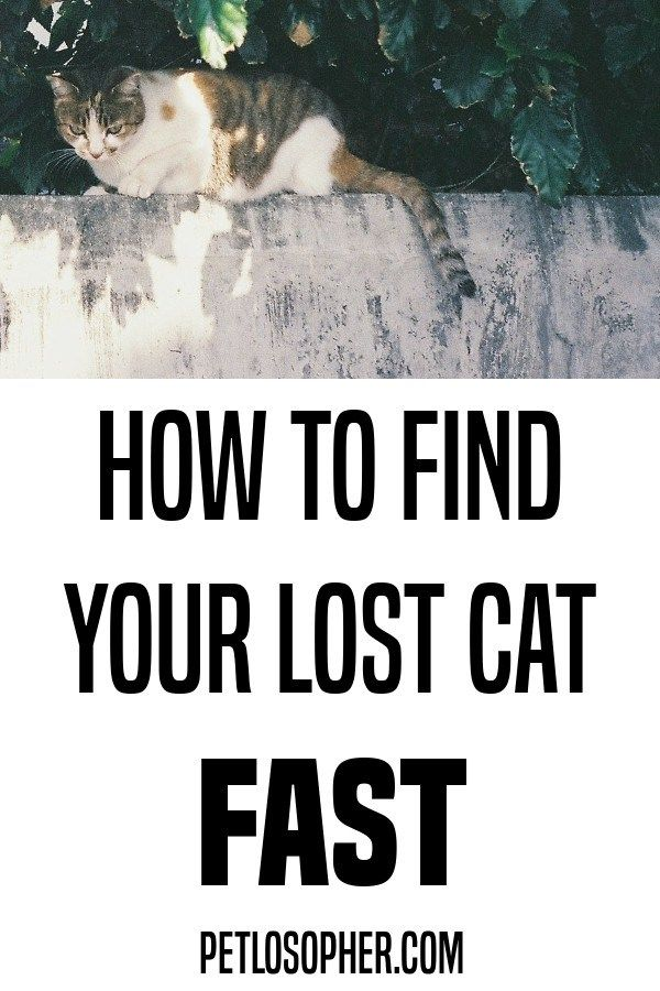 How To Find Your Lost Cat Fast Lost Cat Cats Outside Cat Run