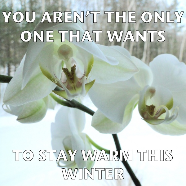 how to take care of orchids in winter