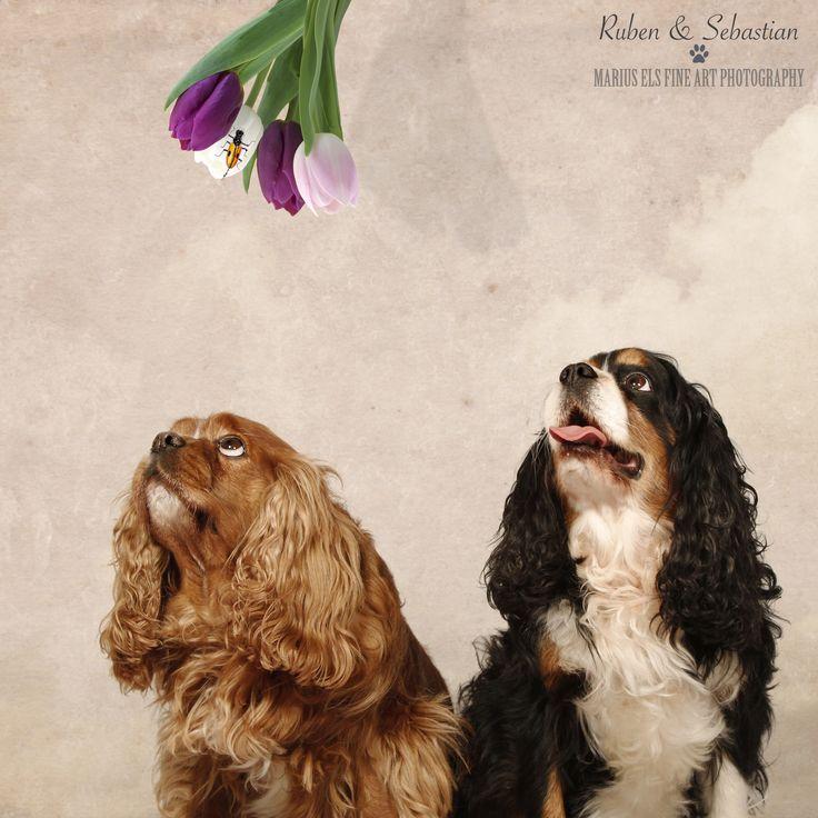 Doggie Delights 1 - Ruben and Sebastian