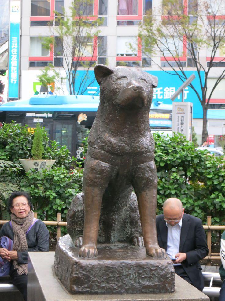 Il famosissimo cane #Hachiko, realmente esistito in #Giappone. Ogni giorno attendeva il suo padrone (defunto) alla stazione di #Shibuya, ed è proprio qui che hanno posizionato la sua statua. http://viaggigiappone.animeclick.it