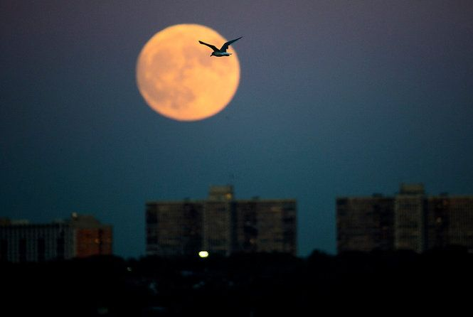 We'll have a chance to see the wolf moon -- or January full moon -- on Thursday, January 12, 2017 (1/12/2017). The wolf moon happens when the earth is directly between the sun and moon in January. In this case, it follows the November Supermoon by two months. The next full moon on the 2017 lunar calendar will be February 10.