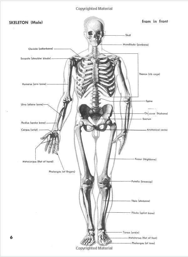Großzügig Kiefernerv Anatomie Bilder - Anatomie Von Menschlichen ...