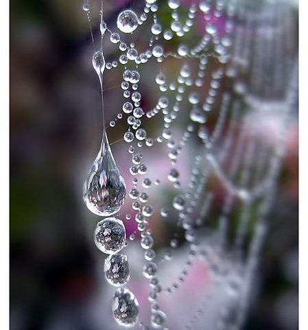 """spider pearls """"One of the joys found in gardening""""                              …"""