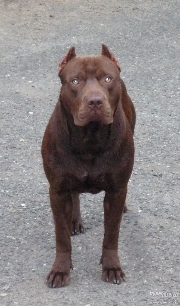 red chocolate pit