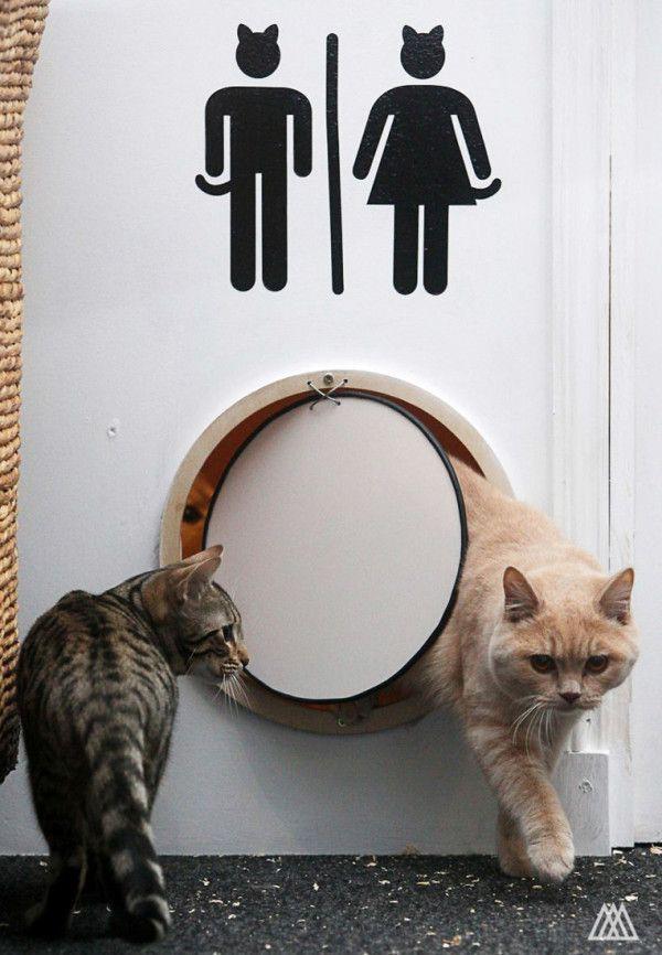 Maison de Moggy: Scotland's First Cat Cafe by SPLINTR
