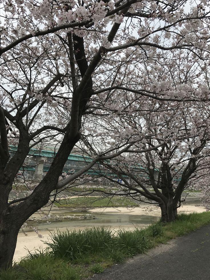 福岡県 今年は、遅い。