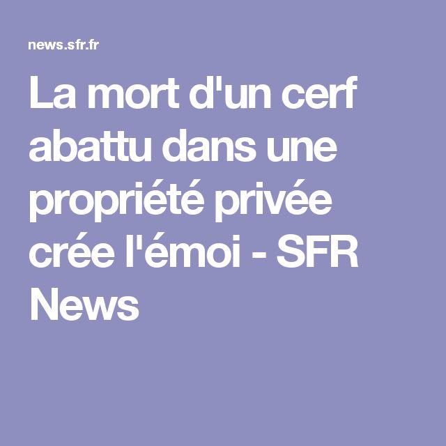 La mort d'un cerf abattu dans une propriété privée crée l'émoi - SFR News
