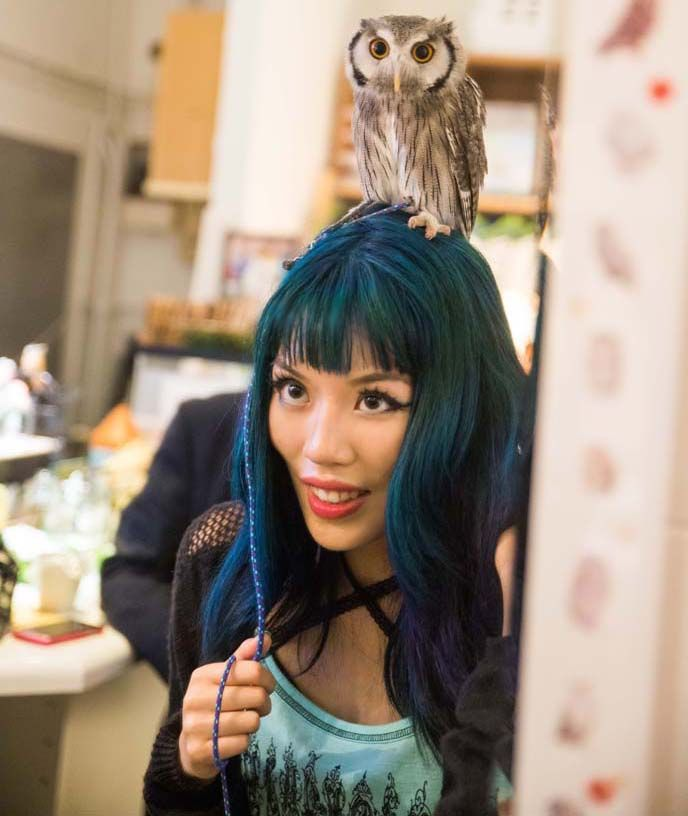 Peek inside the Japanese OWL cafe -- where you play and pet with baby owls!! Exclusive photos from Tokyo's Fukuro no Mise are on La Carmina blog >>   http://www.lacarmina.com/blog/2014/08/tokyo-japan-owls-theme-cafe/  tokyo japan owl cafe
