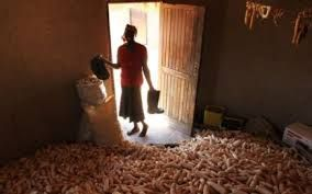 Risultati immagini per wfp improved community grain store in Africa