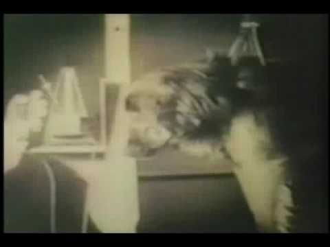 Classical Conditioning - a good video explaining Ivan Pavlov's theory (Classical Conditioning) with some of the original footage of Pavlov at work.