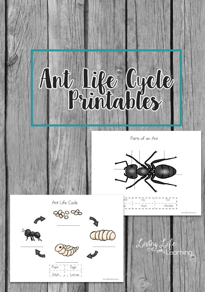 17 best ideas about ant crafts on pinterest ant insect bug crafts and insect crafts. Black Bedroom Furniture Sets. Home Design Ideas