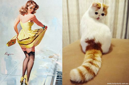 Cats as Pin Up Models