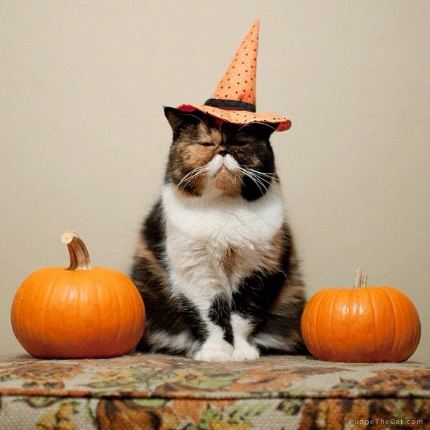 Image result for halloween cats images