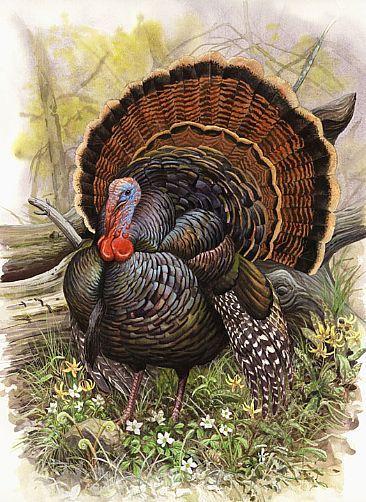 Wild Turkey ~