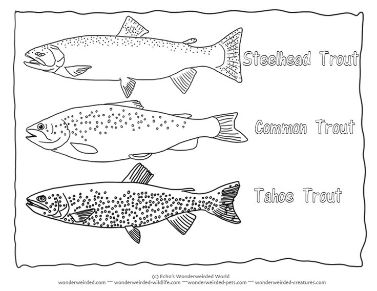 Trout coloring page collectionfrom our wonderweirded fish for All fish names