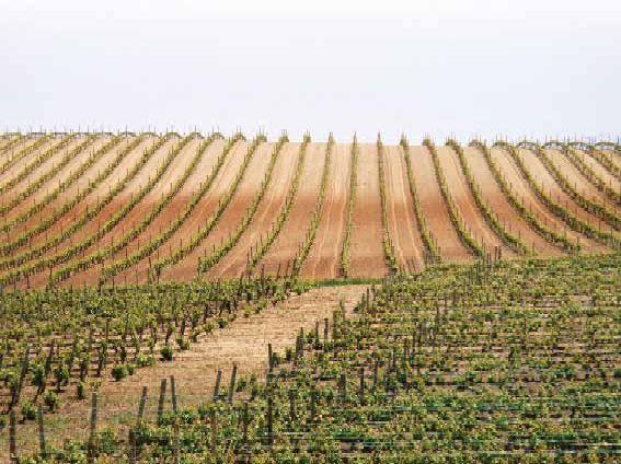 Tirsdag 2. oktober møtte godt over 40 glade og reiseklare VinoGastromedlemmer opp på parkeringen ved klubben, for 5-dagers tur til Rioja og Navarra. http://www.spania24.no/vinogastro-tur-til-riojanavarra/