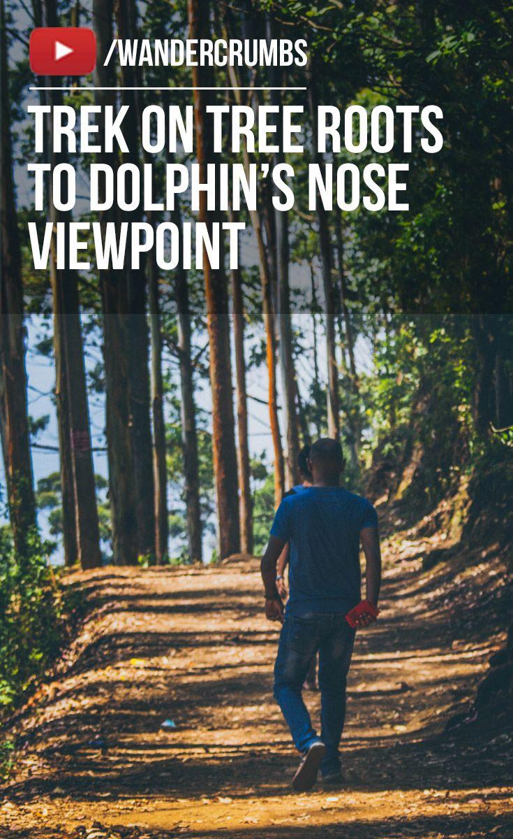 Walking on Beautiful Tree Roots towards the Dolphins Nose Viewpoint in Kodaikanal, Tamil Nadu