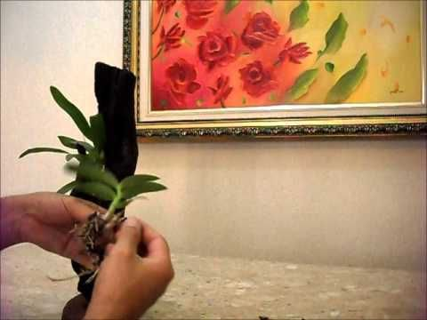 Orquidea cutivar   em troco ..