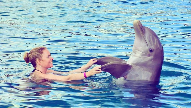 Zwemmen met dolfijnen? Het kan! Bij het Curaçao Sea Aquarium, waar de onderwaterwereld van Curaçao te beleven is, is de Dolphin Academy gevestigd.