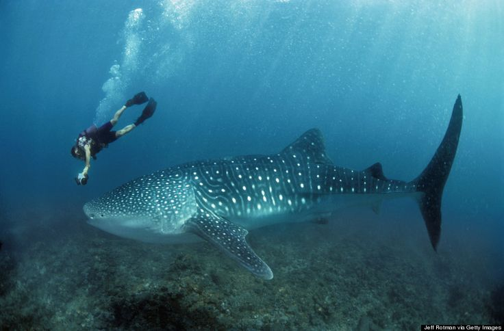 Ningaloo Reef, Western Australia | 27 Of The Best Places In The World To Swim