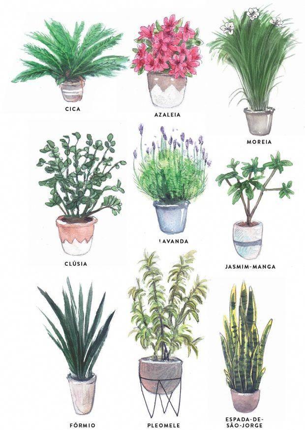 Plantas De Interior Bonitas Plantascolgantes Plantas