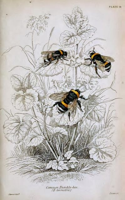 Librarian Tells All: Black, White, and Botanical All Over: Wild About Vintage Natural History Prints