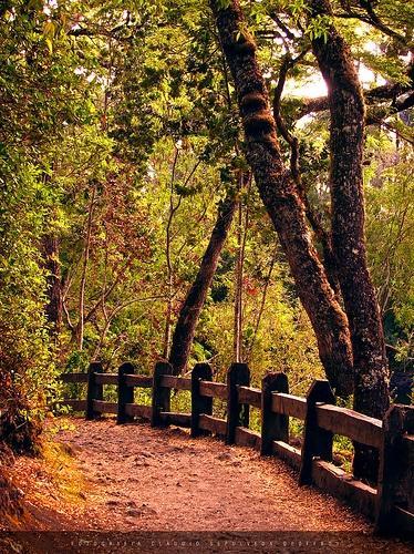 Vicente Perez Rosales National Park. Laguna Verde track.  reservas@chiletravelway.com