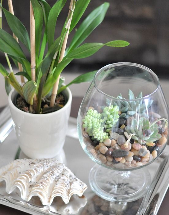 succulent terrarium + mirrored plate/tray adds a nice touch of life and light