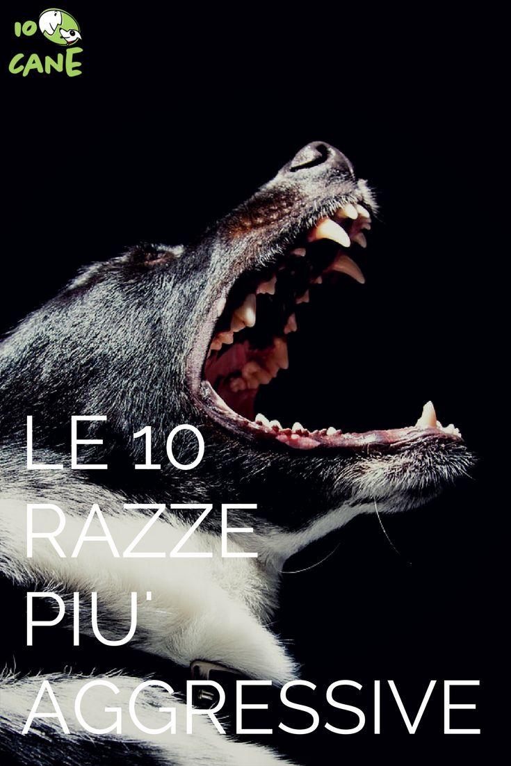 Hai paura di incappare in un cane aggressivo? ecco le 10 razze più difficili