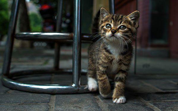 تحميل 100 صورة خلفيات قطط رائعة وعالية الدقة مداد الجليد Cute Cat Wallpaper Animals Funny Cat Photos
