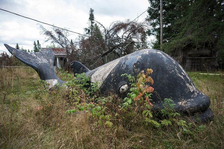 The Creepy Legacy of New Brunswick's Abandoned Animal Theme Park