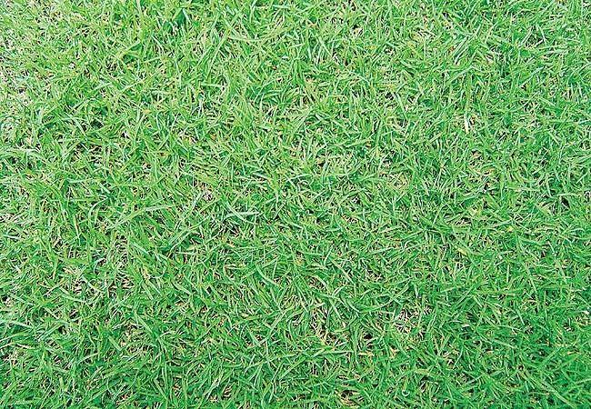 Tudo sobre grama.